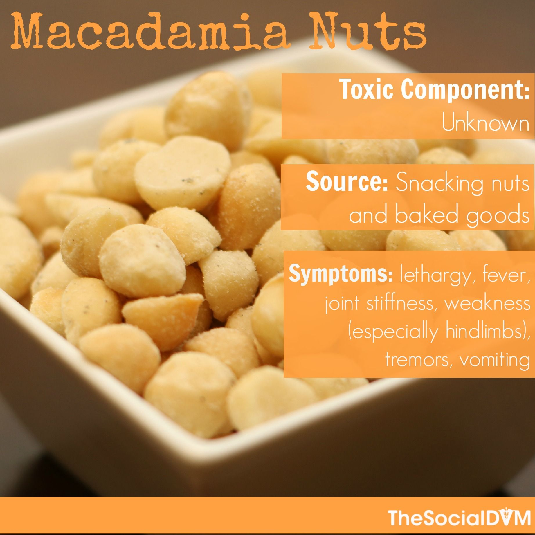 Macadamia Nuts Barrington Oaks Veterinary Hospital Http Bovh Com Pet Poison Prevention Pet Poison Poison Prevention Week