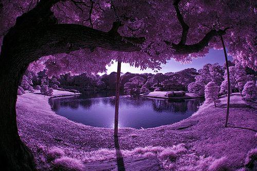 Purple Scenery With Pond In Japanese Garden Beautiful Nature Scenery Purple Love