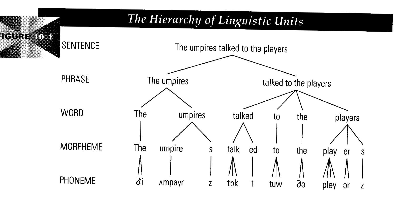 morphology tree diagram 2001 bmw z3 wiring linguistic phonology comparing both and