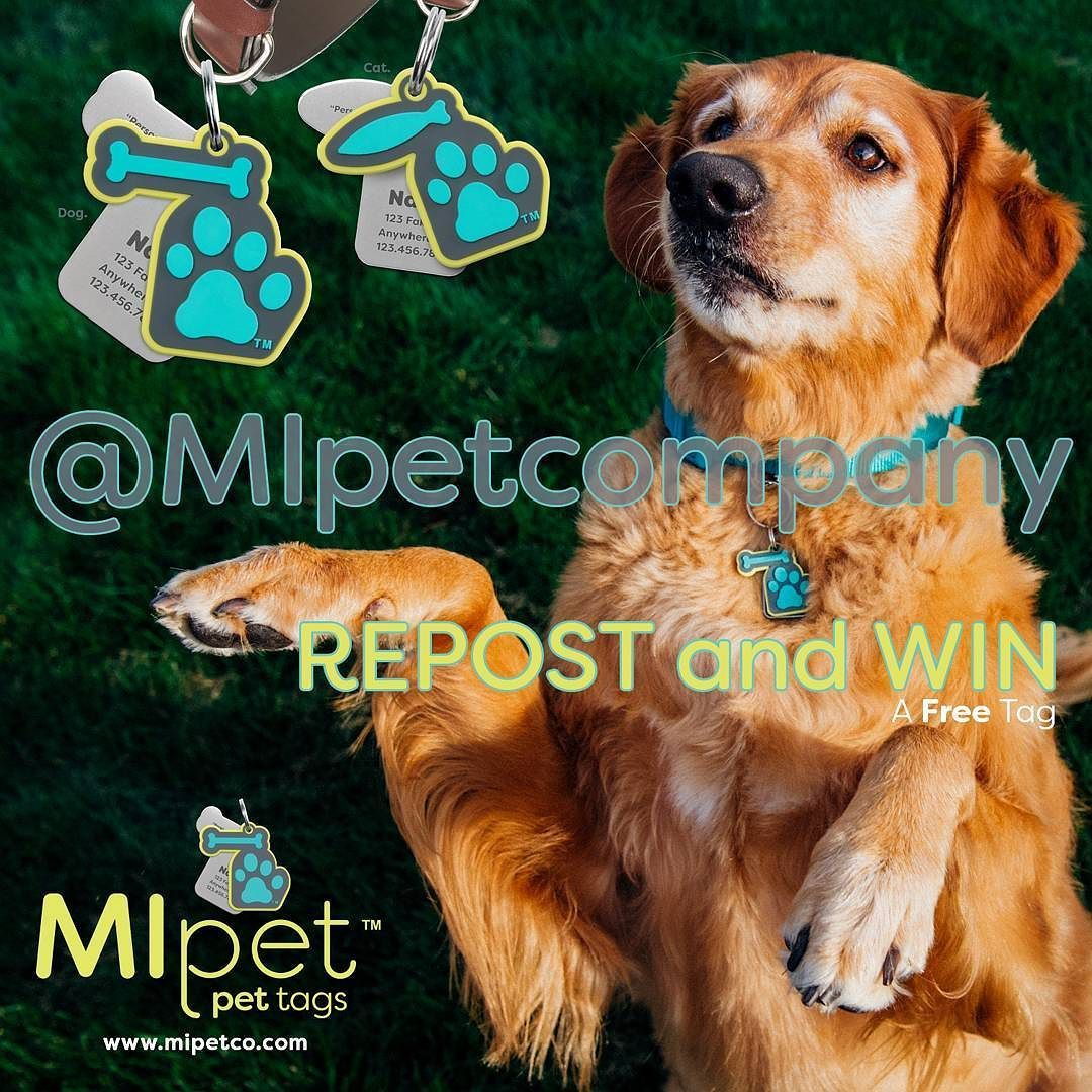 The Mipet Pet Tag Giveaway Is Back Simply Repost This Post And