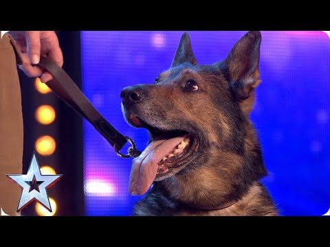 Heroic Police Dog Finn Moves The Judges To Tears Auditions Bgt 2019 Youtube Service Animal Animal Stories