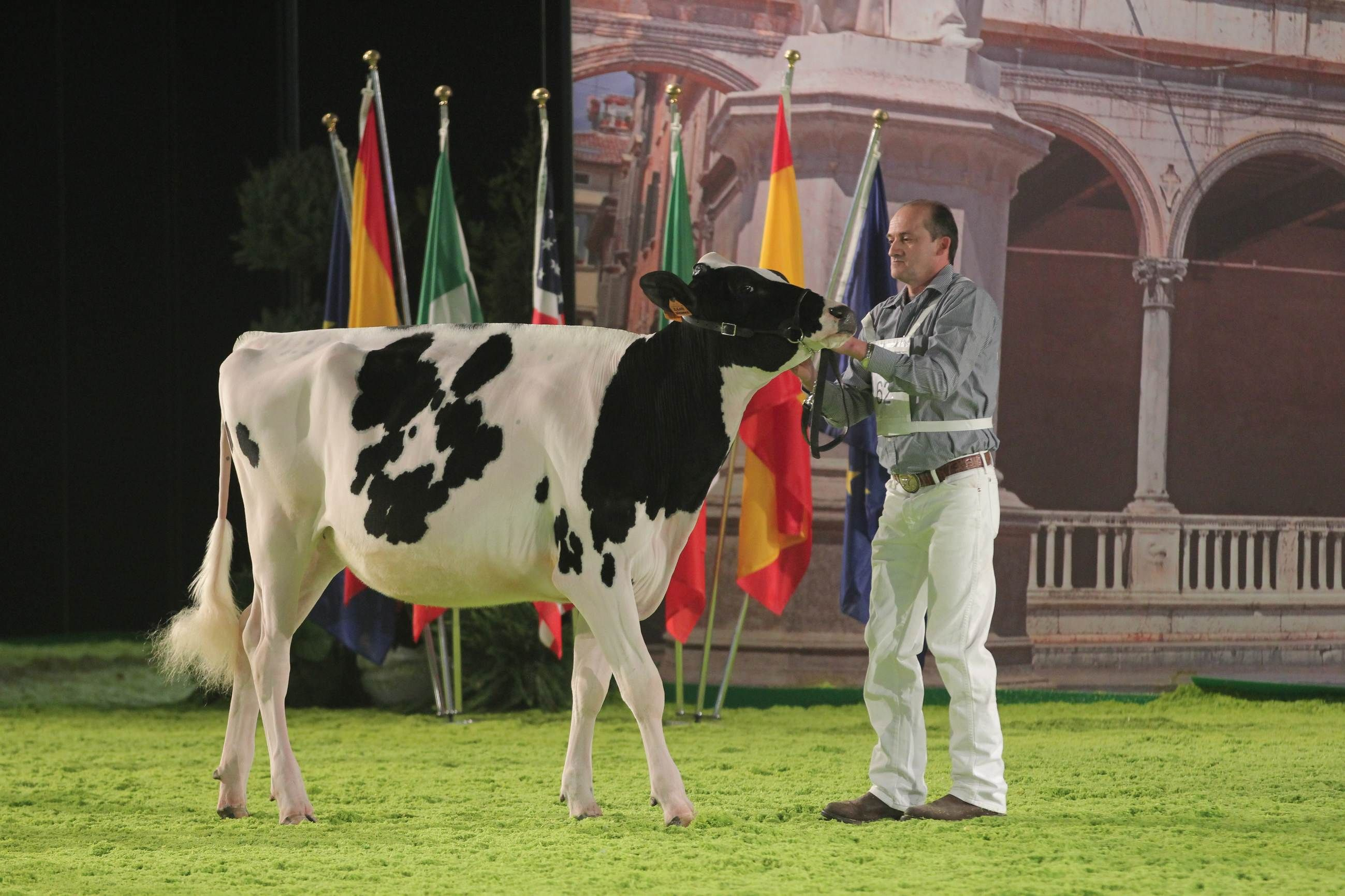 #fieragricolaevents #animalshows 11^ European Open Holstein show (2012 edition)