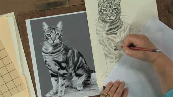 Cartoon Pet Portraits