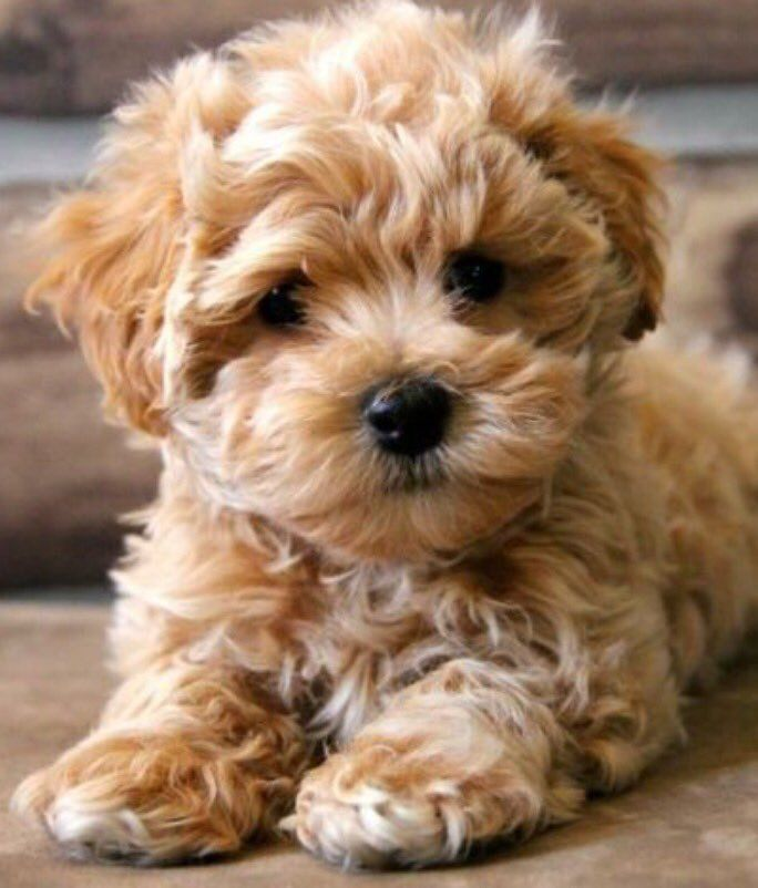 Cute Puppies Baby Animals Dogs