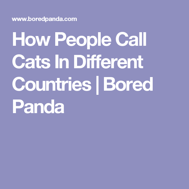 How People Call Cats In Different Countries | Bored Panda