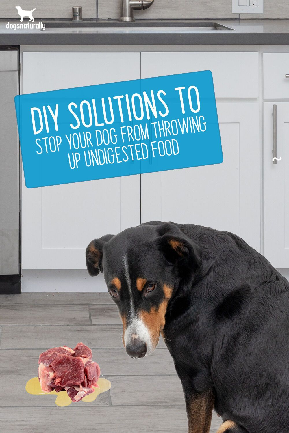 Pin on dog health conditions