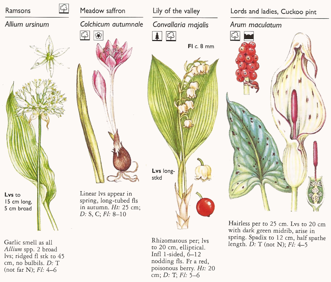 Lily of the valley month life cycle google search kyrin and lily of the valley month life cycle google search izmirmasajfo Image collections