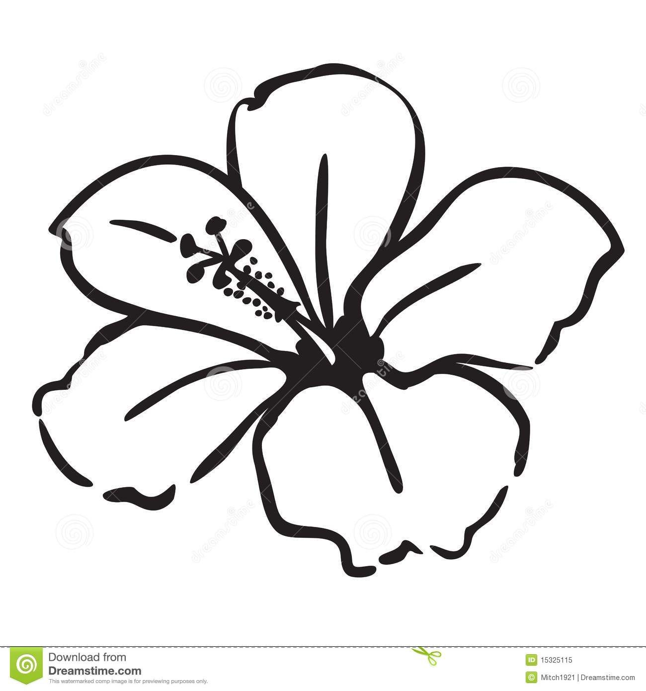 hibiscus drawing Google Search Coastal Pinterest