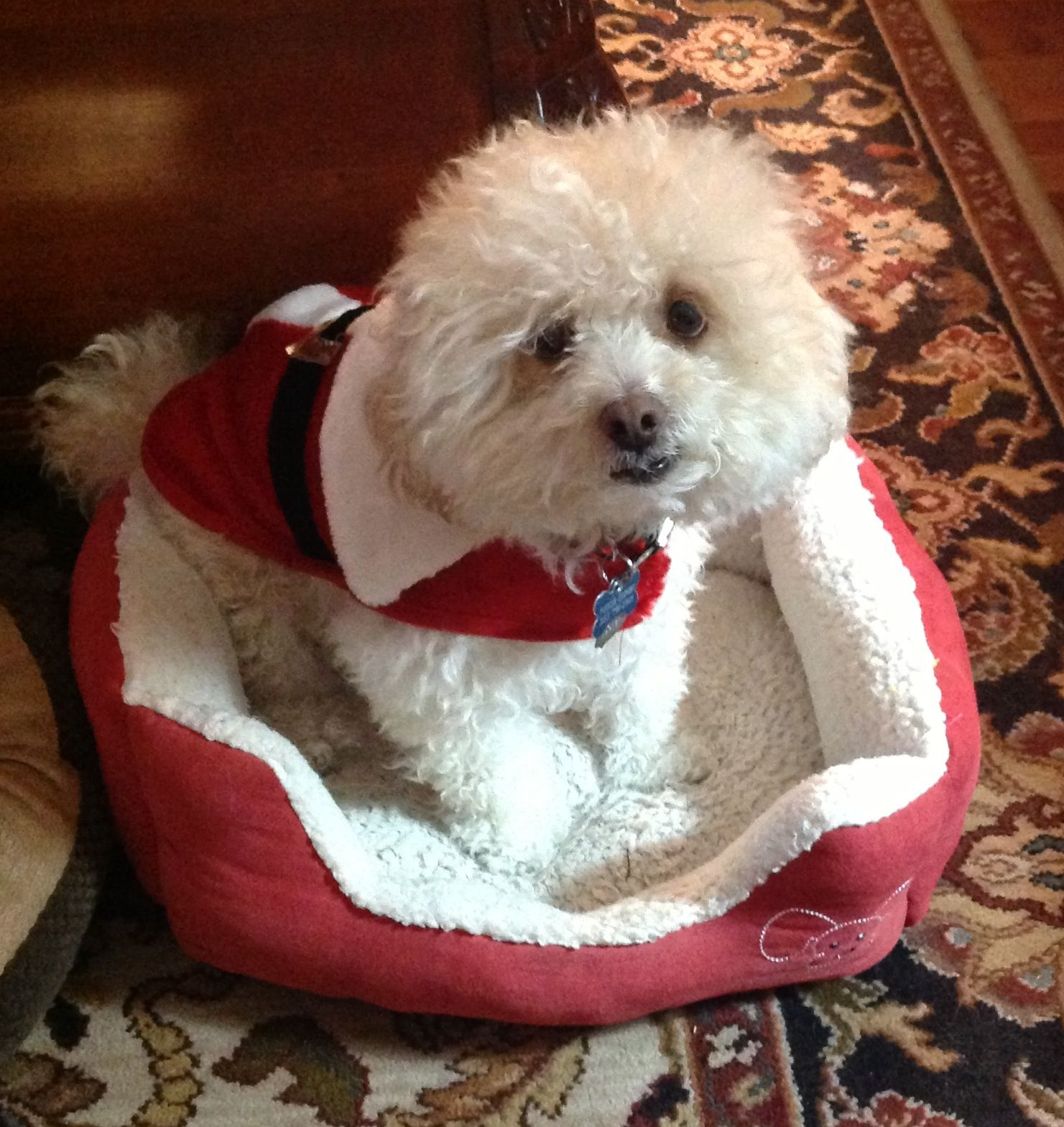 My sweet Tucker!