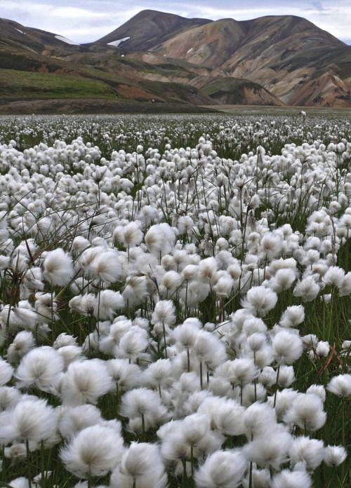 ¿Cómo será correr en campo de algodón?