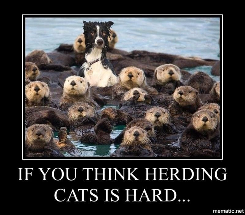 Pin By Katherine Bonsol On Memes Herding Cats Herding Cats