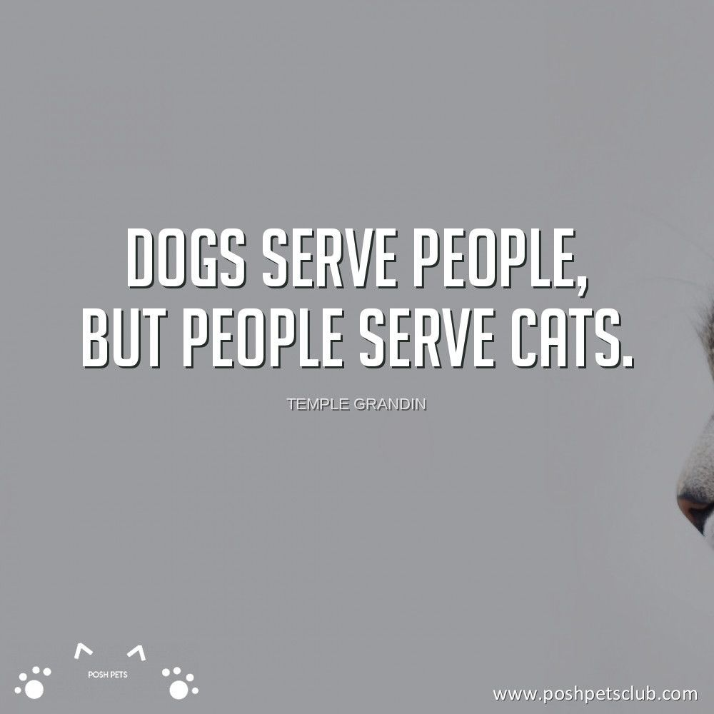 Dogs Serve People But People Serve Cats No Truer Statement Truth Catsarecool Ilovemycats Poshpetsclub In 2020 Pets Cats Truth