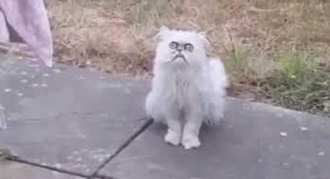 Weird Looking Cats 10