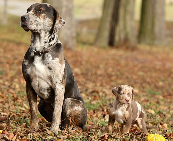 Large Dog Breed Rescue Az