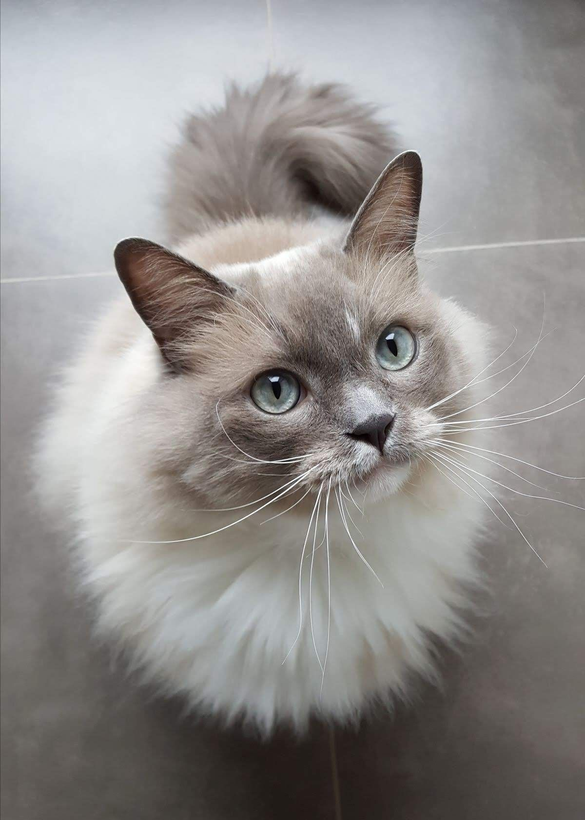misskatieclarkson All cat breeds, Pretty cats, Cute cats
