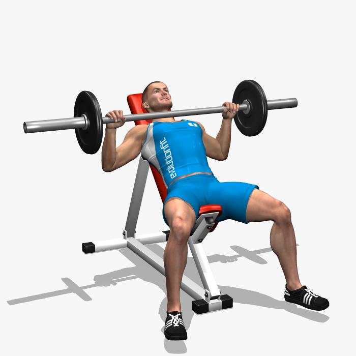 Barbell Incline Bench Press Involved Muscles During The Training Chest Rutinas De Entrenamiento Ejercicio Fisico Entrenamiento