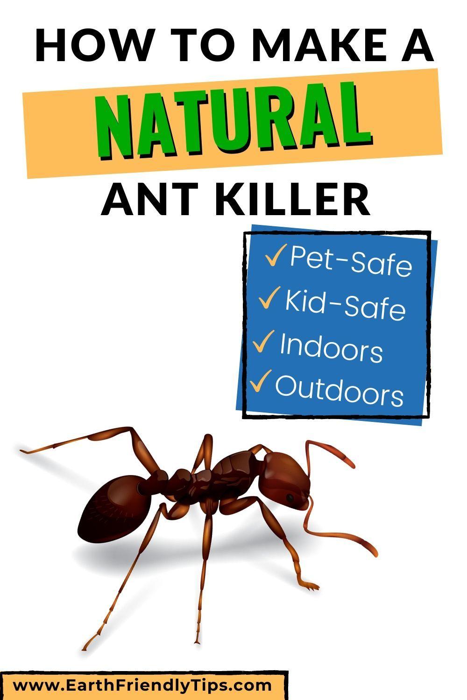 99e103833fd96ff9a57d7408c5f3824a - How To Get Rid Of Ants Safely Around Pets