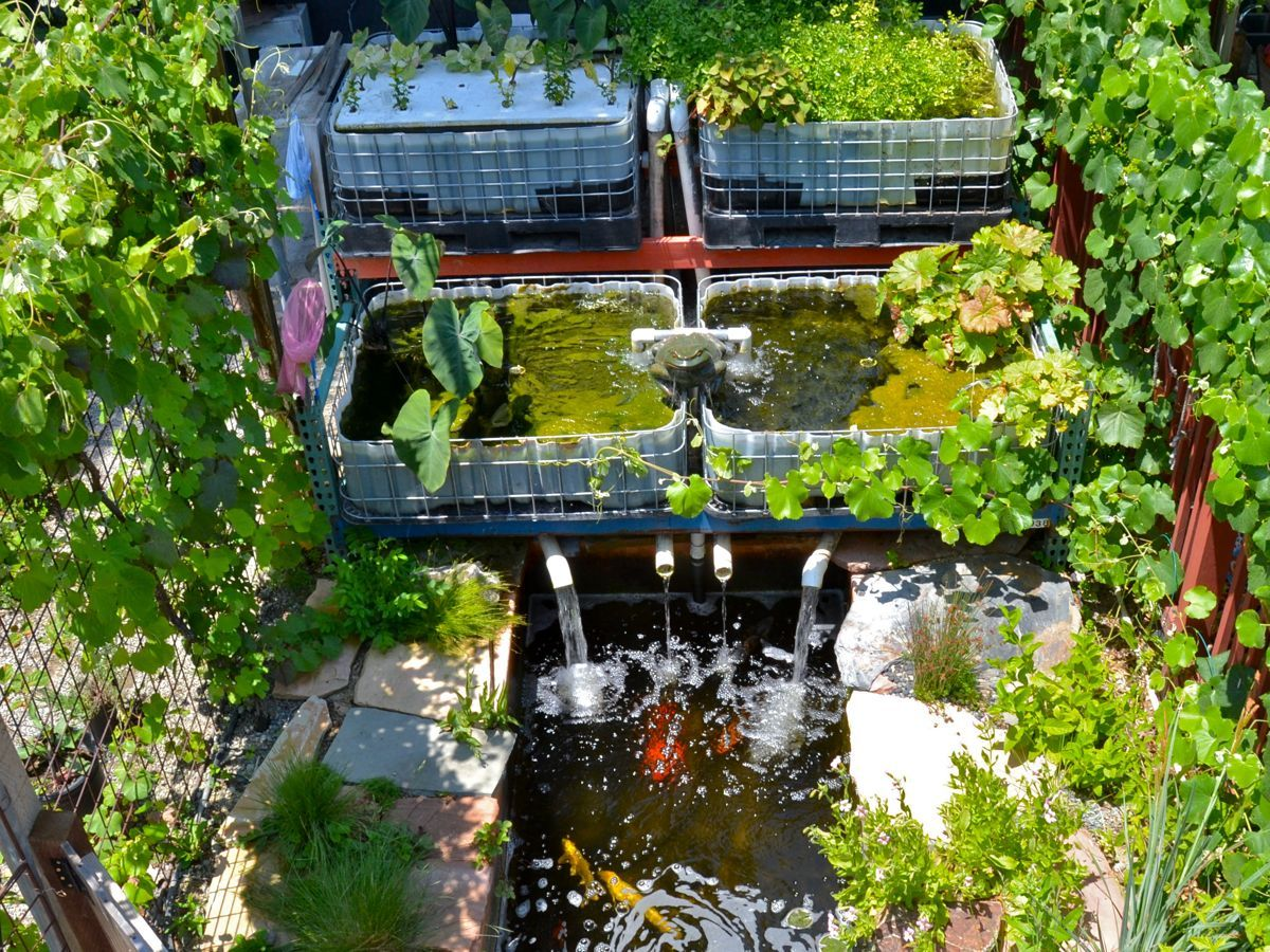 Aquaponics is one of our city 39 s special features for Fish used in aquaponics