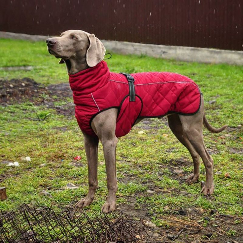 Wholesale Pet Clothes Jacket For Dog Winter Dog Clothes Red Clothing For Dogs Golden Retriever Water Dog Jackets Winter Dog Winter Clothes Winter Dog
