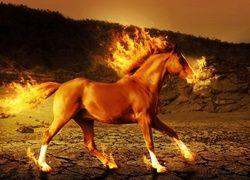 Koń Ogień Tapeciarniapl Ogień Horses Horse Wallpaper