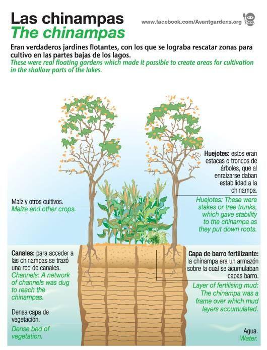 99e19d3df31b1e400b3c59a3b18b8a3a - Inca Terrace Farming And Aztec Floating Gardens