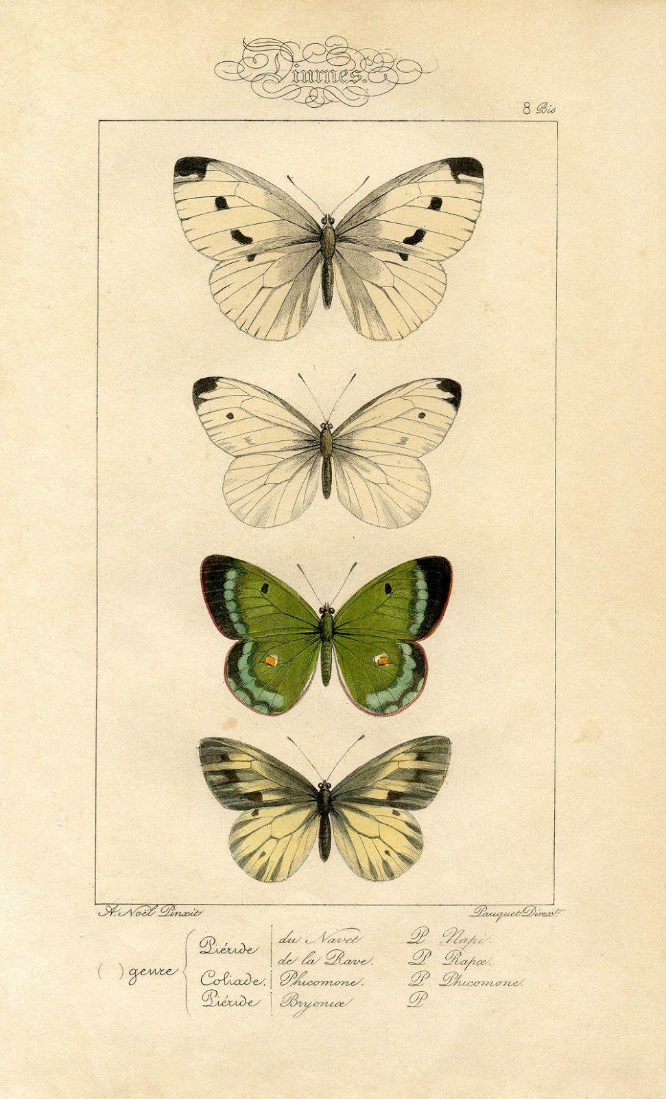 Natural History Printable Image - Moths - Butterflies | Natural ...