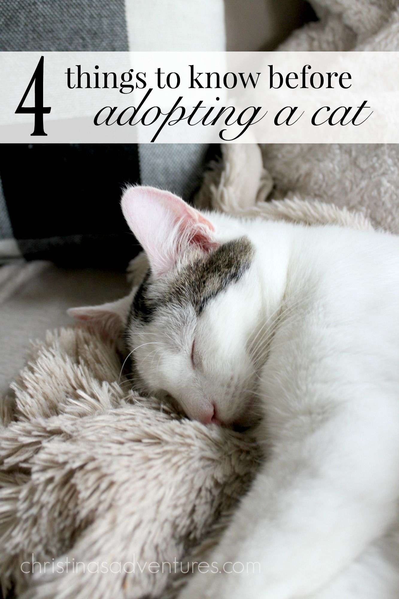 Meet Bailey {what you need to know when you adopt a cat