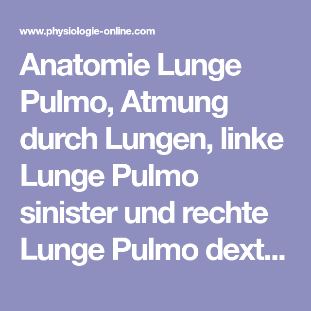 Anatomie Lunge Pulmo, Atmung durch Lungen, linke Lunge Pulmo ...