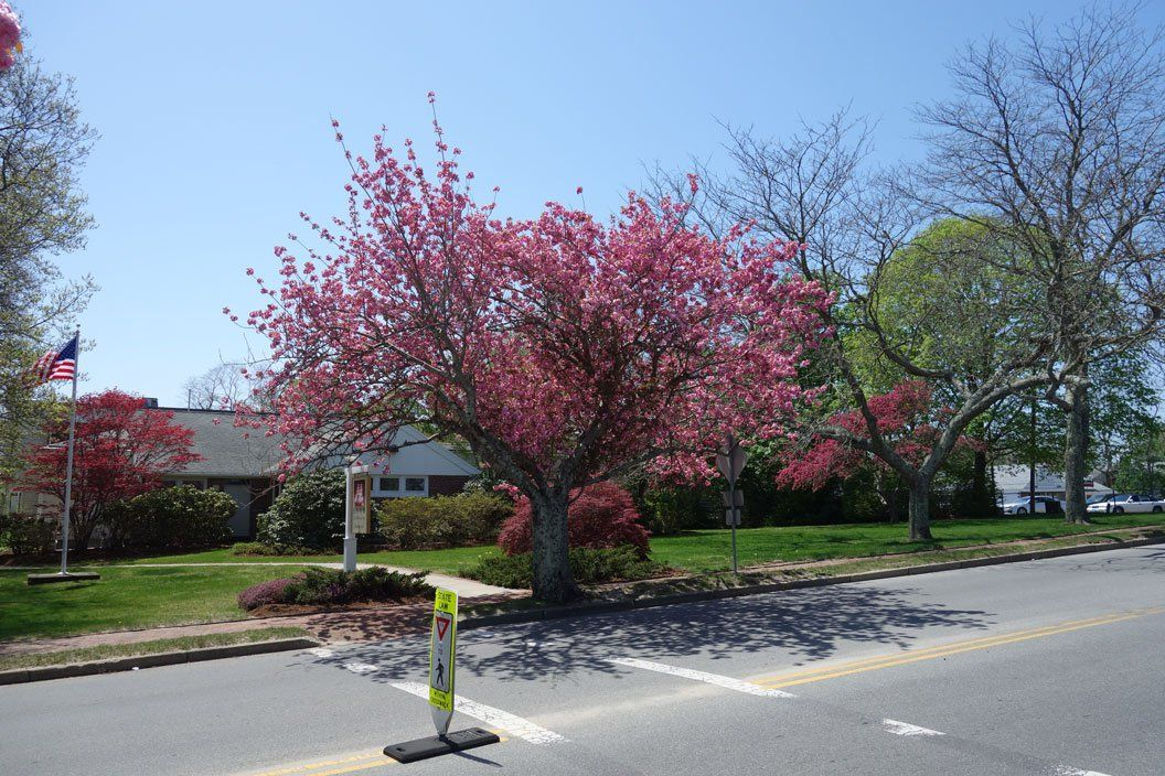 Those Blooming Trees The Furies Cape Cod Cleaning Service Blooming Trees Cape Cod Bloom
