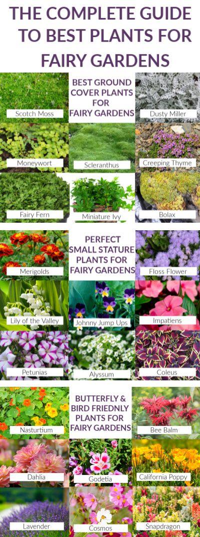 99e26dcbb6a445a6f474695e15edaf10 - Best Plants For Miniature Fairy Gardens