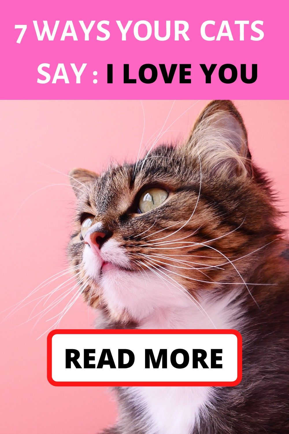 how to understand if your cat loves you