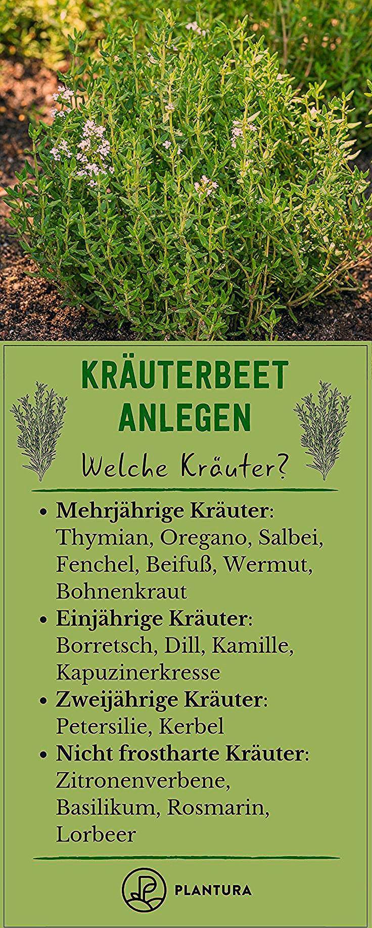 Kräuterbeet anlegen: Standort, Sortenwahl & Anleitung - Plantura