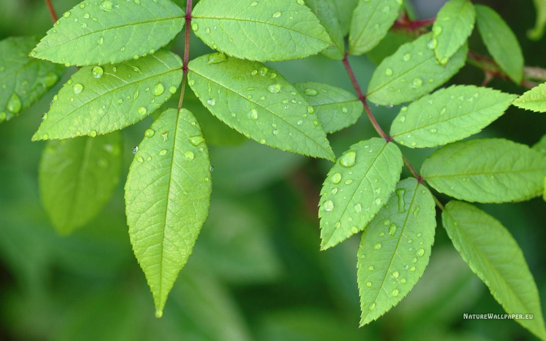 green leaves - Google-søk