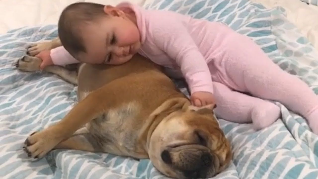 French Bulldog And Baby Compilation 2018 Funny Dog Videos Try