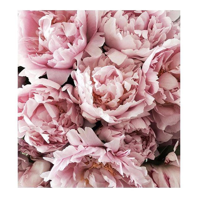 p r e t t y   x . . . . . #bellamummablooms #flowers #flower #petal #petals #nature #beautiful #love #pretty #blossom #sopretty #flowersofinstagram #flowerstyles_gf #flowerslovers #flowerporn #bride #floral #florals #flowermagic #instablooms #bloom #blooms #botanical #floweroftheday #love #peony
