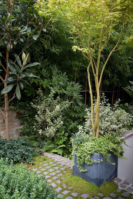 Terrasse en rez de jardin paris 16 small garden jardins jardin d 39 ombre jardin paysager - Rez de jardin paris ...