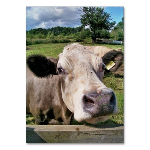 Cute cow business card business cards cow and card templates cute cow business card colourmoves