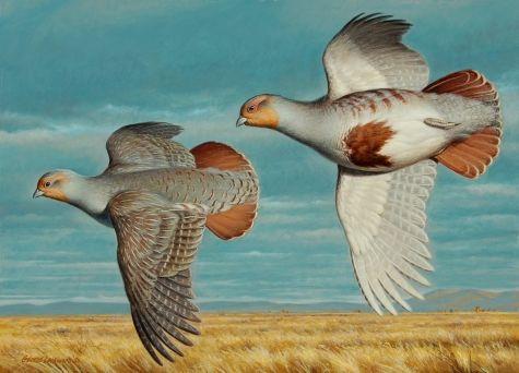 Best Hungarian Partridge 13X18 Original Art Painting By George 400 x 300