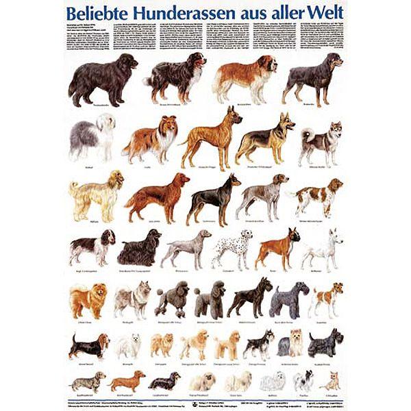 Beliebte Hunderassen Hunderassen Beliebte Hunderassen Hunde Rassen