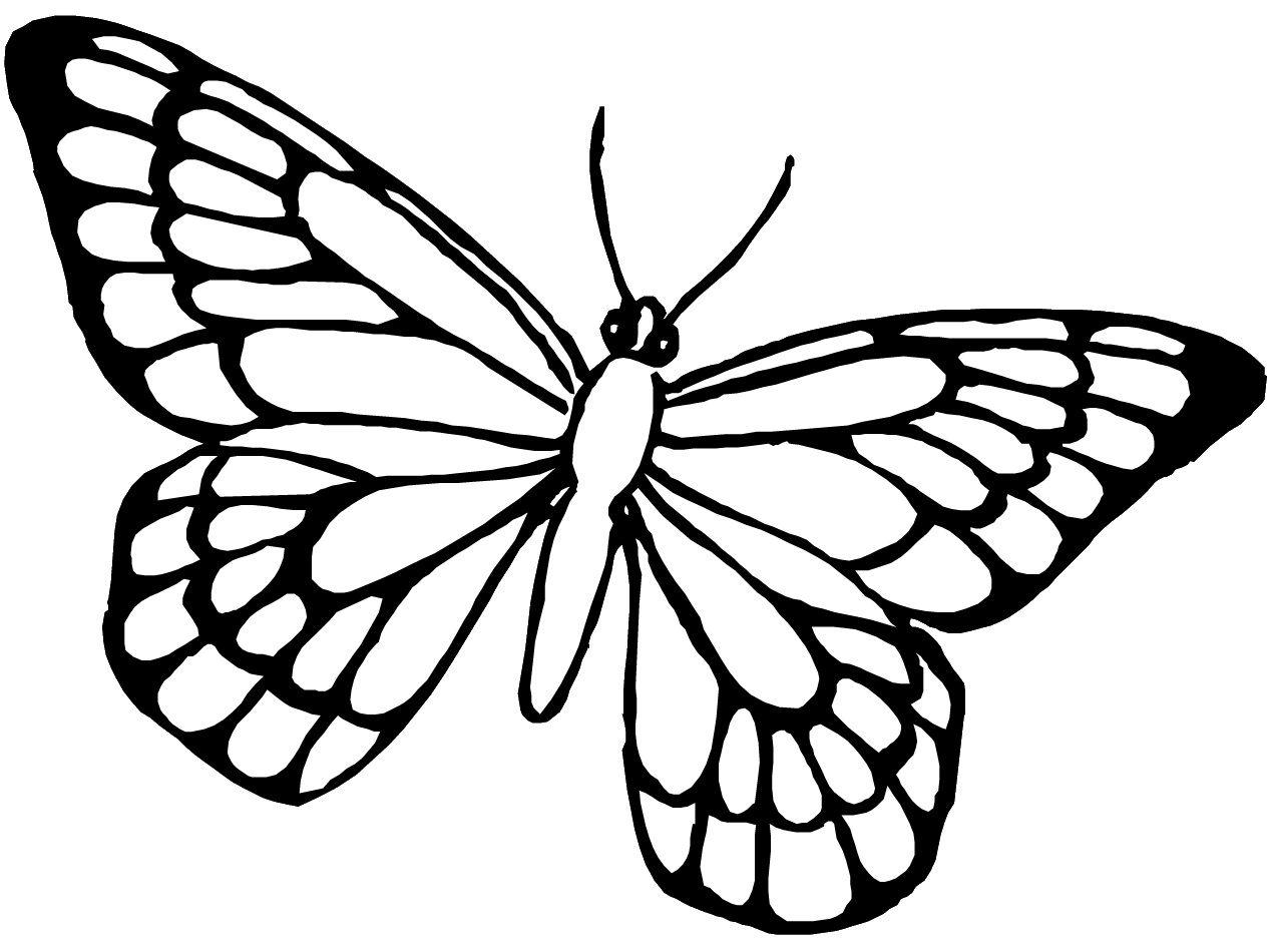 Immagine Correlata Colori Disegni Farfalle