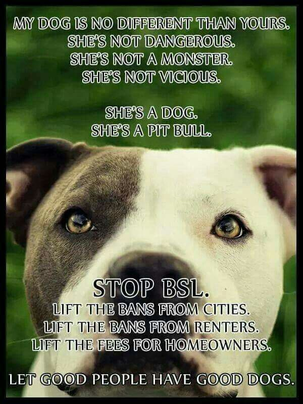 Stop Bsl With Images Pitbulls Best Dogs Pitbull Dog