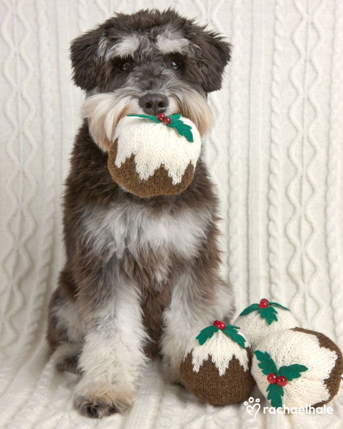 Stanley Mini Schnauzer Christmas Puddings Holly And Icing