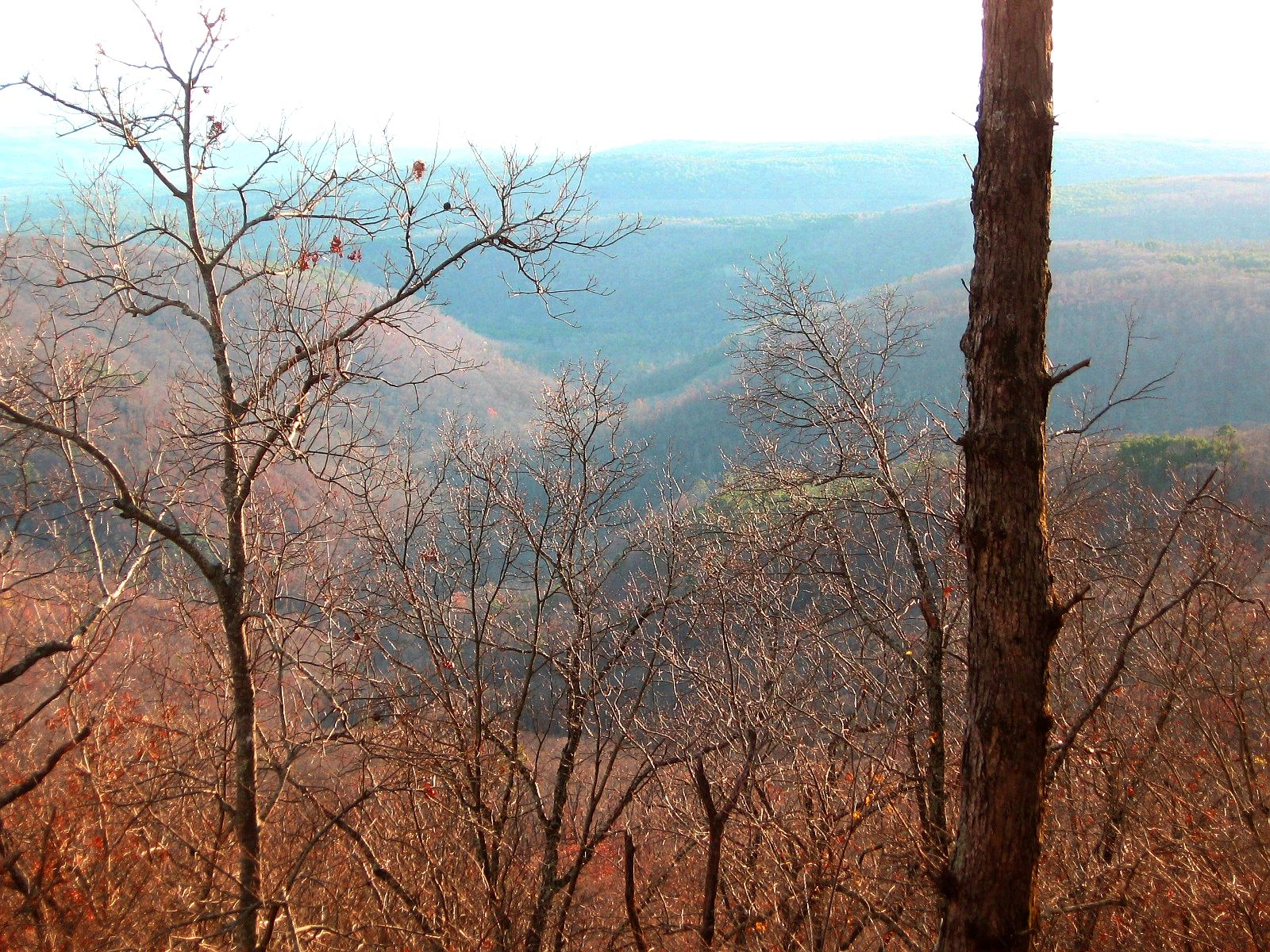 White Rock Mountain, Boston Mountain within the Ozarks in Arkansas. View from our cabin.