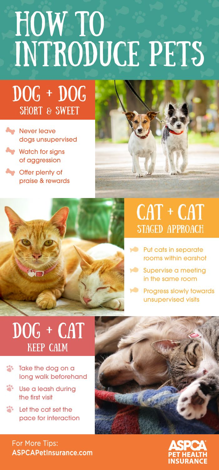 Making Friends Introduction Socialization Tips Pets Cat Care Pet Care