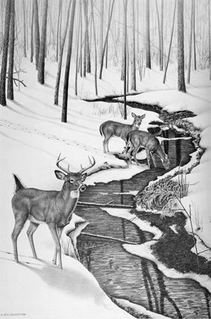 Marie brummett limited edition art print white tail deer black