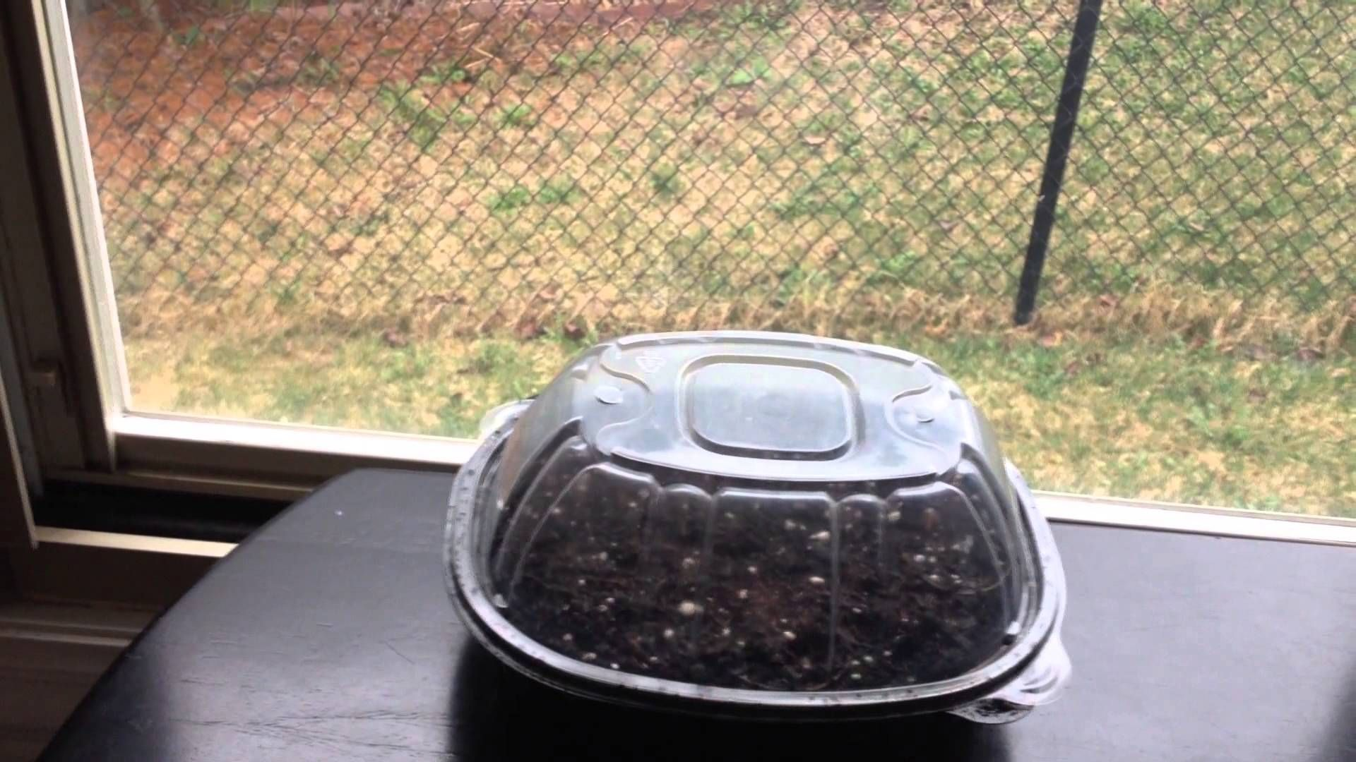 How to make a diy seedling starter greenhouse kit with