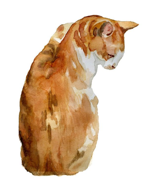 Orange Watercolor Tabby Cat By Ryliecat Watercolor Cat Cat Painting Cats Illustration