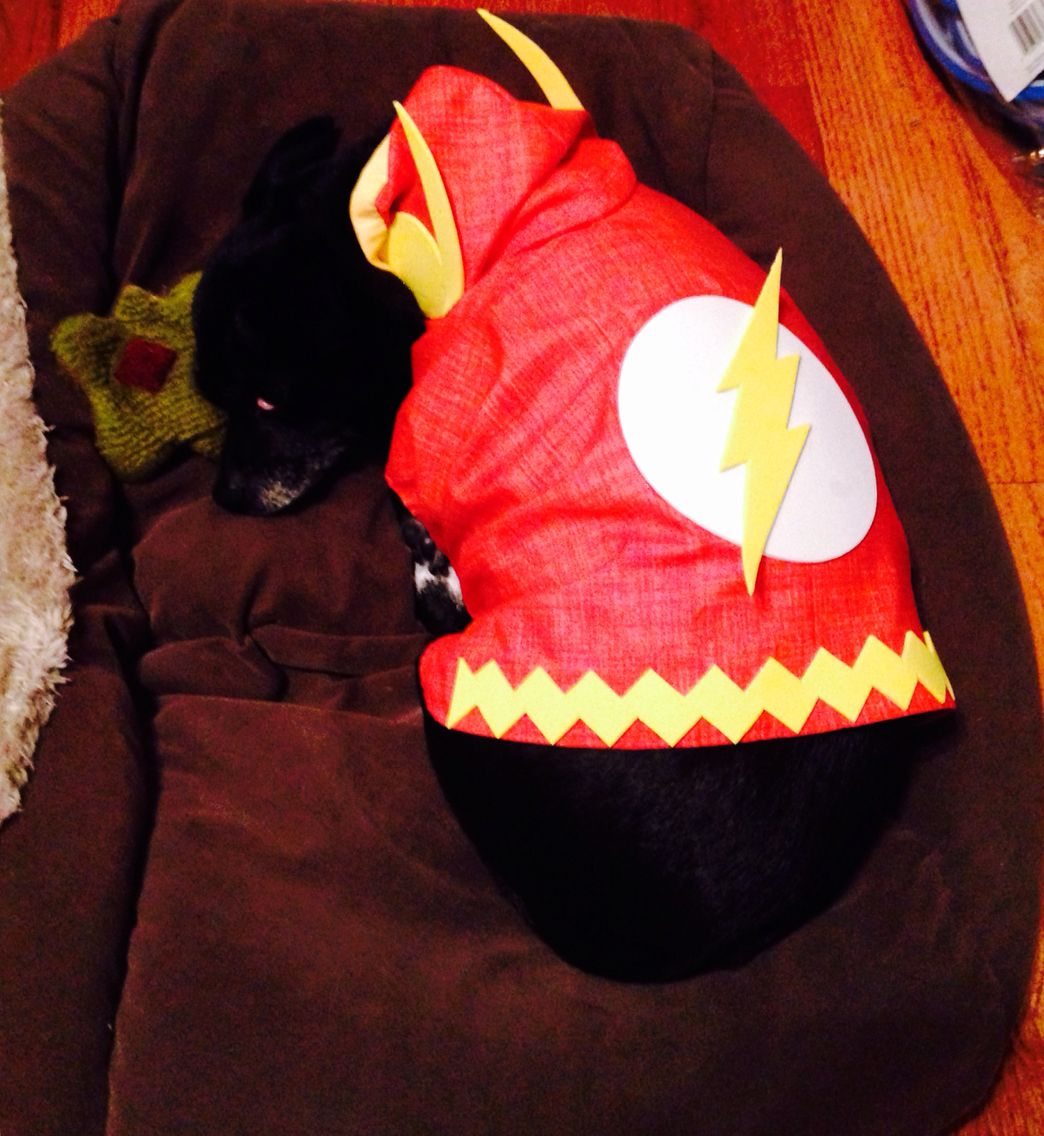 The Flash Dog Costume The Scarlet Speedster The Fastest Dog