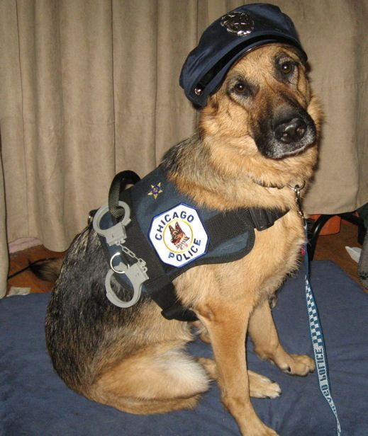 She Would Love To Be A Police Dog Bestfriendspetcare Dog