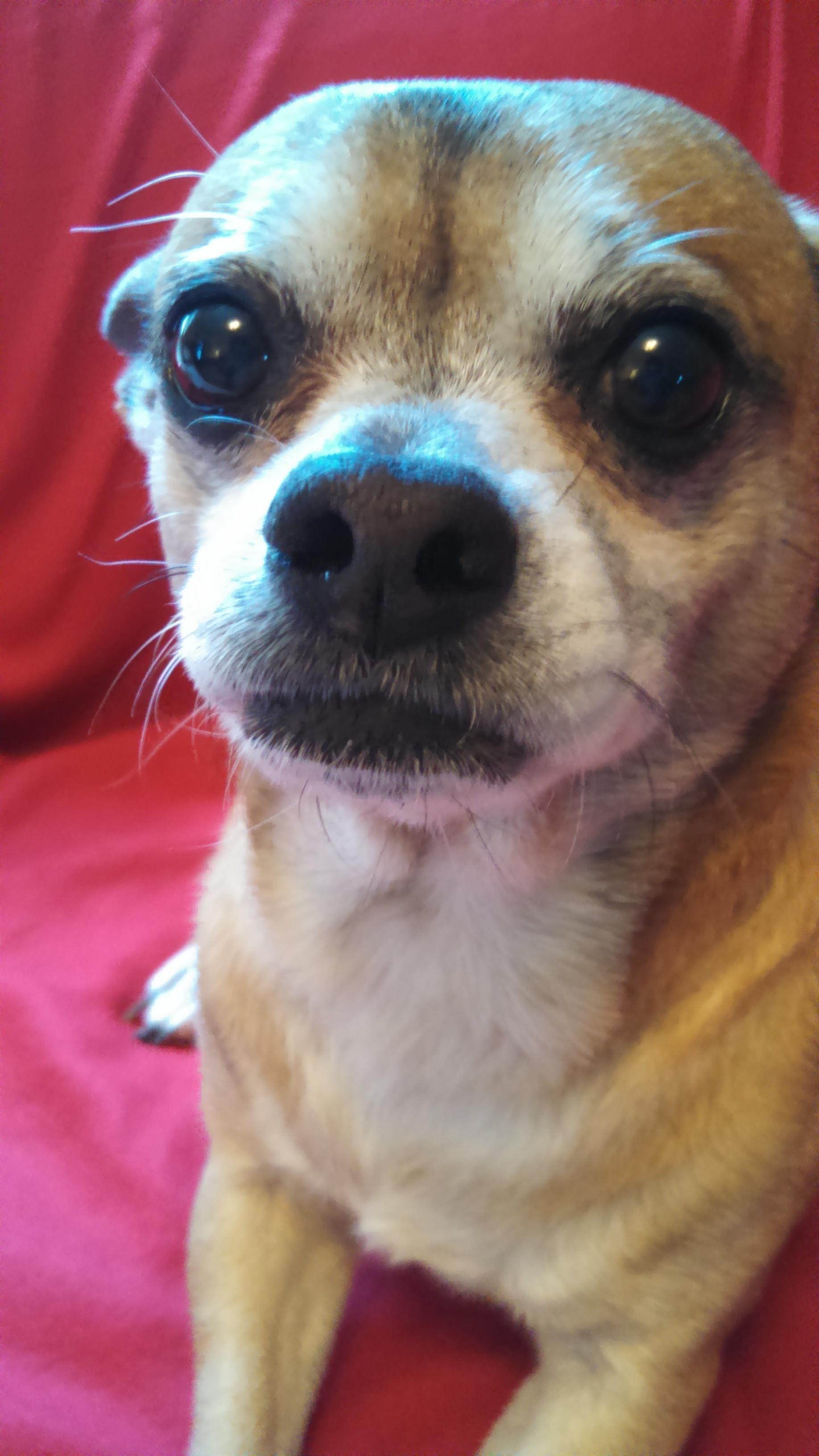 Adopt Oscar on Petfinder Dog adoption, Cat adoption, Dogs